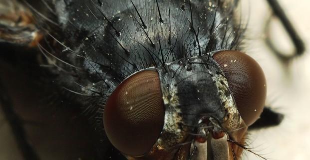 Moskitiera – obrona przed owadami